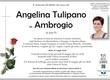 Tulipano Angelina in Ambrogio